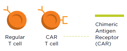 tcell graphic