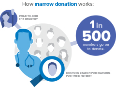 How Marrow Donation Works Correct Size